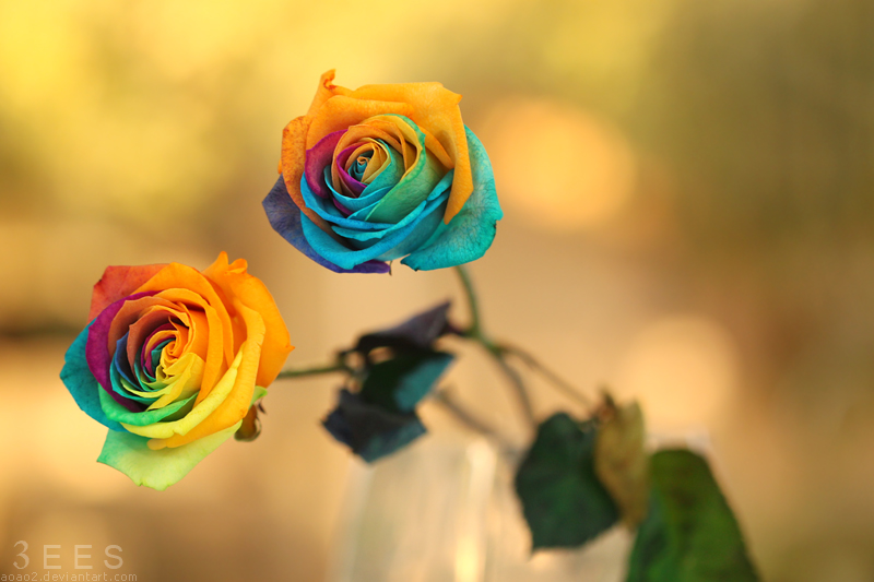 Rainbow roses ... by aoao2