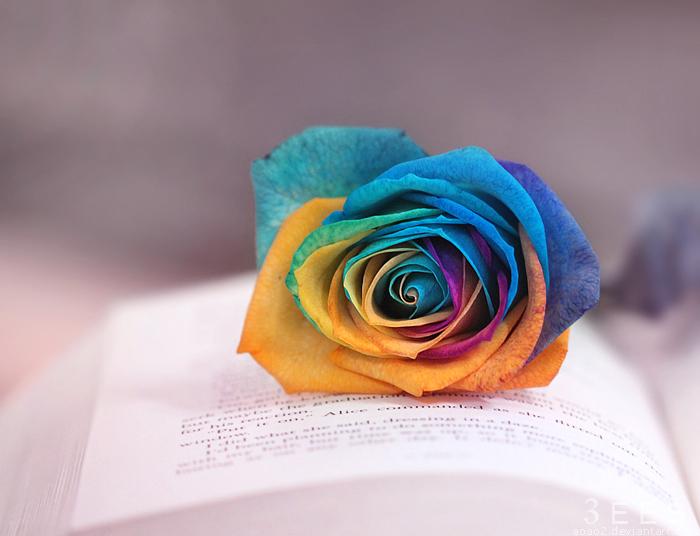 Rainbow rose ... by aoao2