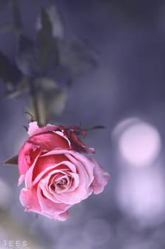 Soft violet ...