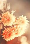 Bright flowers ...