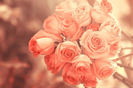 bright roses ...