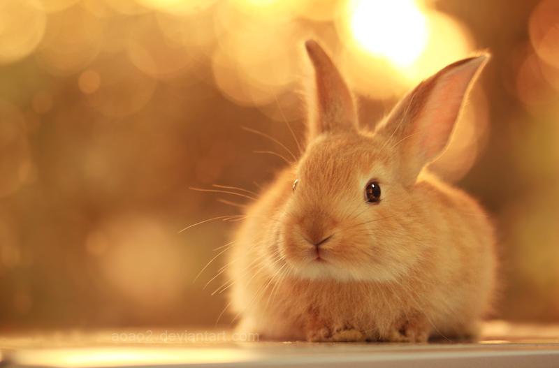 Bunny ... by aoao2