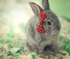 Minnie bunny ... by aoao2