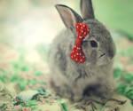 Minnie bunny ...
