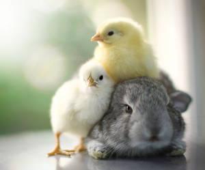 Cuddling ...
