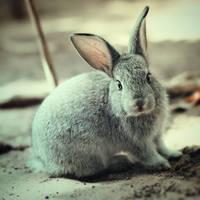 Summer bunny ... by aoao2