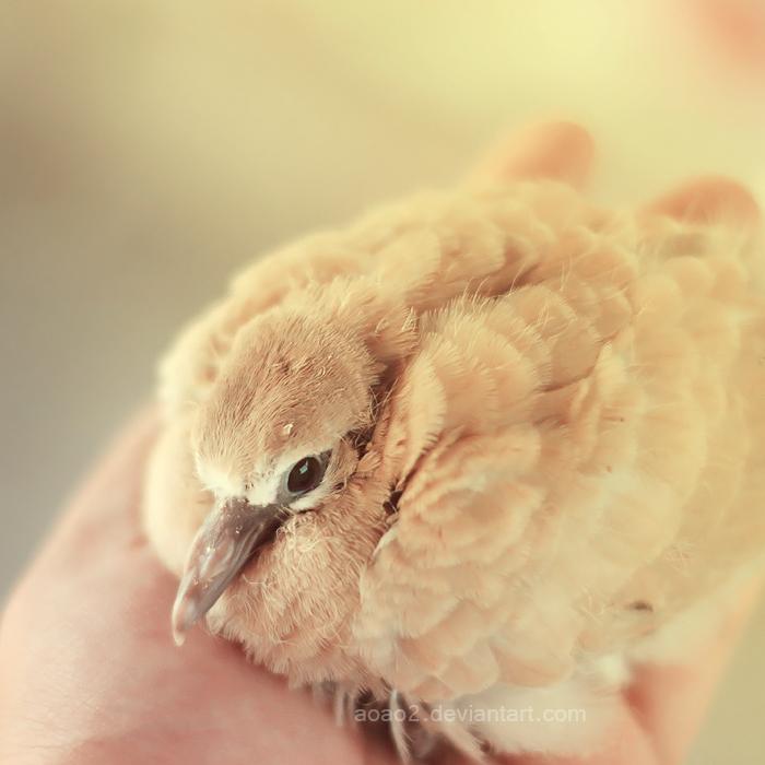 Baby dove ... by aoao2