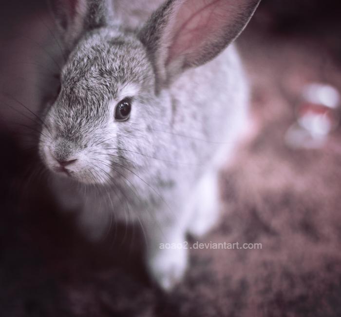 Calm bunny ... by aoao2