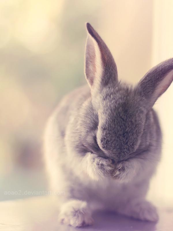 Shy bunny ... by aoao2