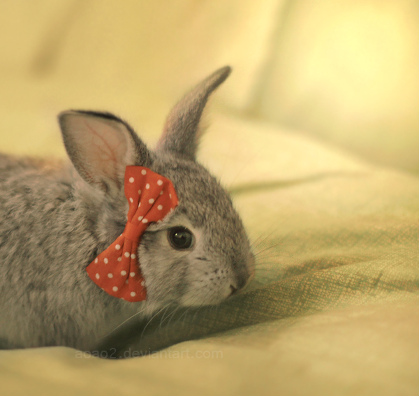 Comfy bunny ... by aoao2