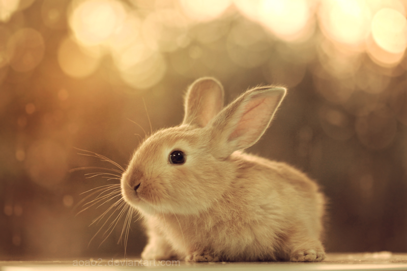 Baby bunny by aoao2