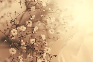 tiny flowers by aoao2