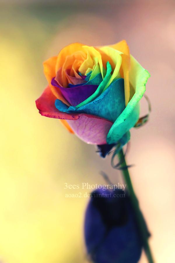 shine like a rainbow by aoao2