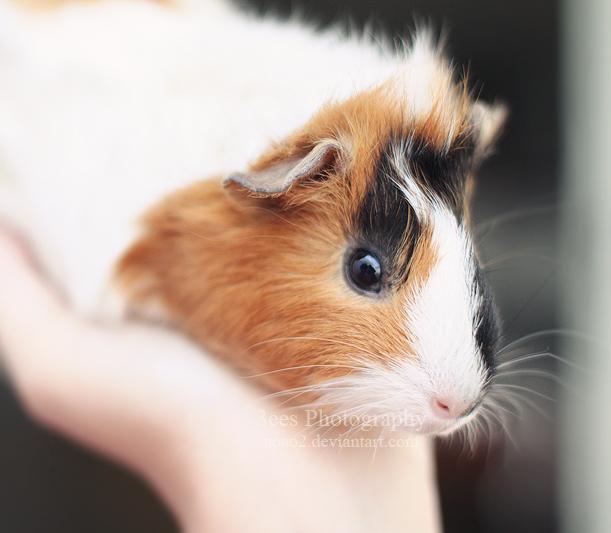 pet love by aoao2