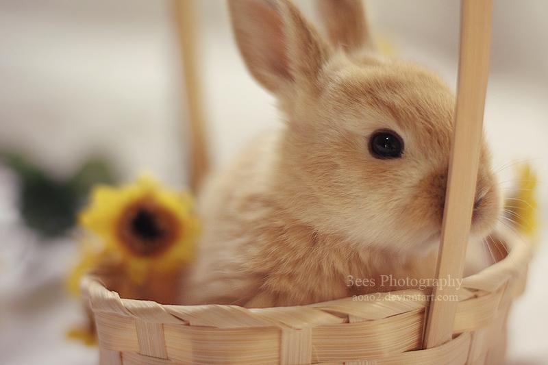 fluffy by aoao2