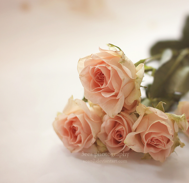 soft beauty by aoao2