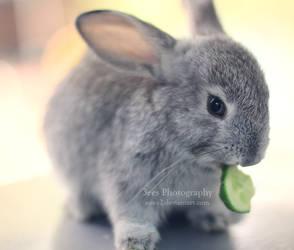 cute snack by aoao2