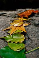Summer To Fall by Jerdan311