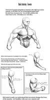 Anatomy part 1