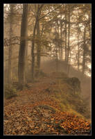 Lothlorien forest by Bruinen