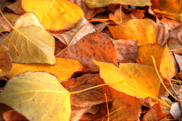 Autumn leaves HDR by AmmarkoV1