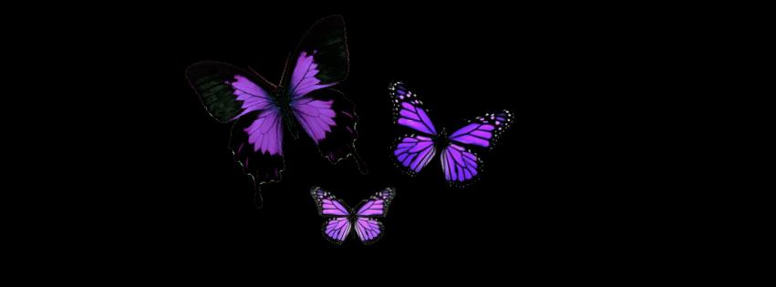 1000 images about z1 plantillas complementos on - Plantillas de mariposas ...