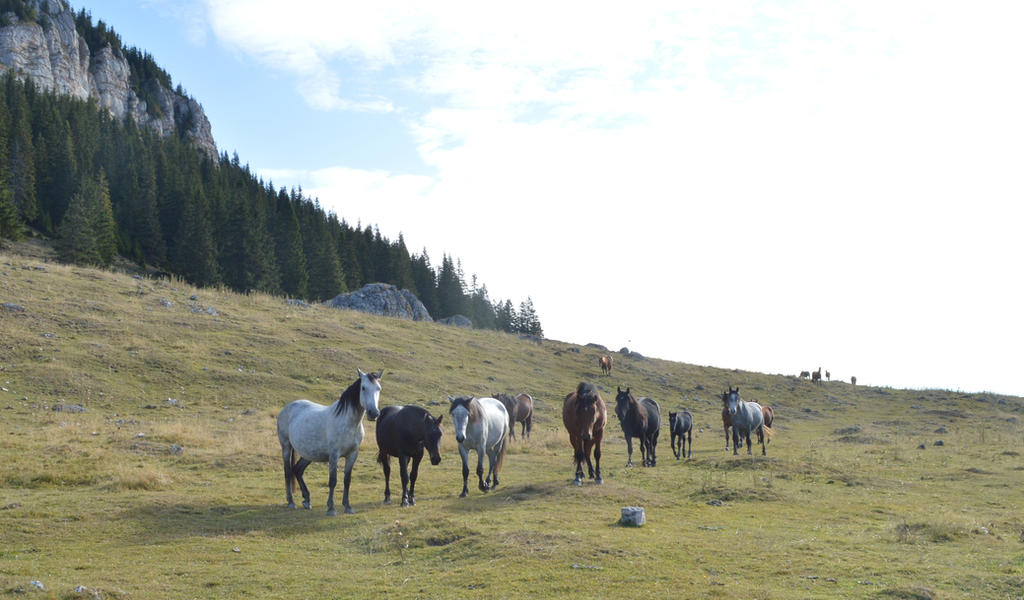 Free horses by Bushido112 by Bushido112