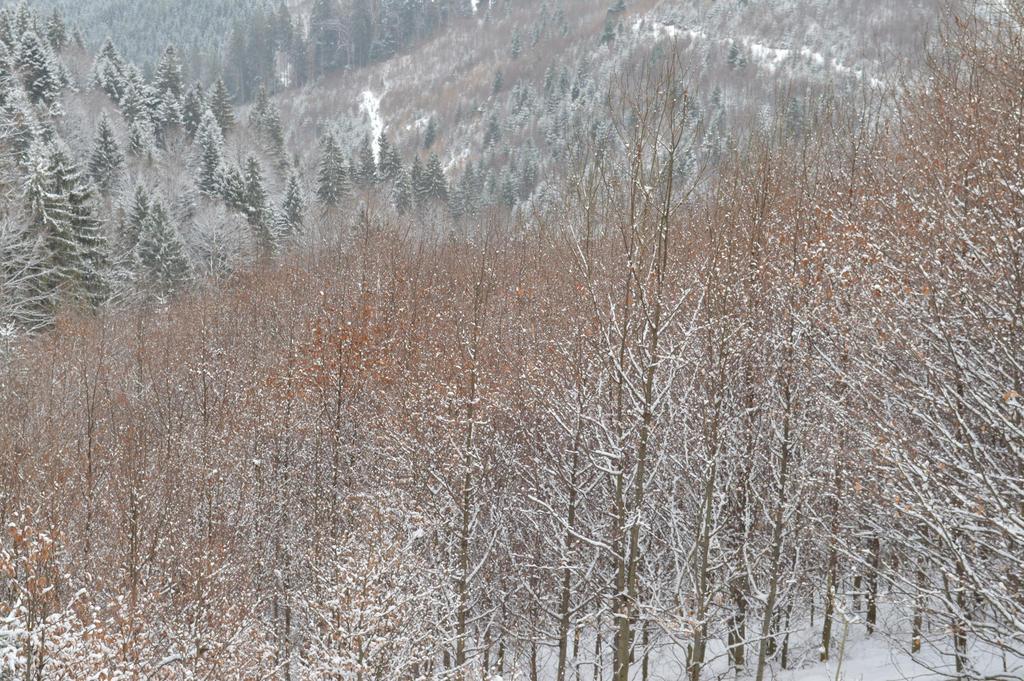Winter sleep 3 by Bushido112 by Bushido112