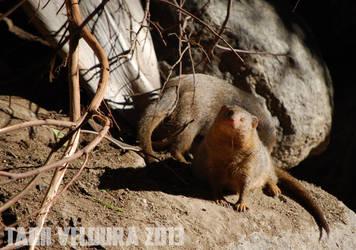 Zoo 13 by tamiveldura