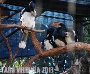 Zoo 16 by tamiveldura