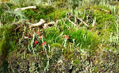 Lichen, moss, bones on stump by markdow