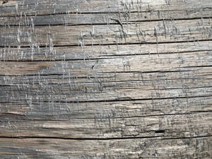 Noble fir surface