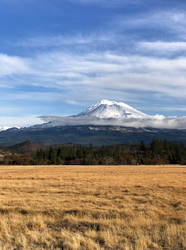 Mt Shasta over plain