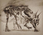 T-Rex vs Triceratops study, LANHM 2015