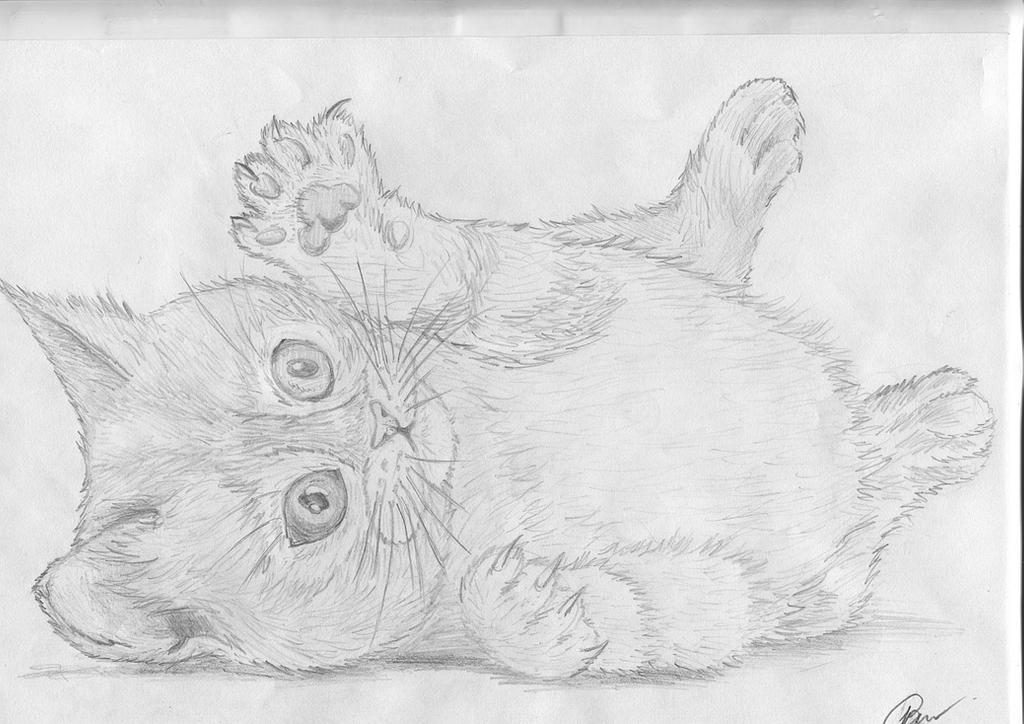 A Kitten by Inqubus-verseum