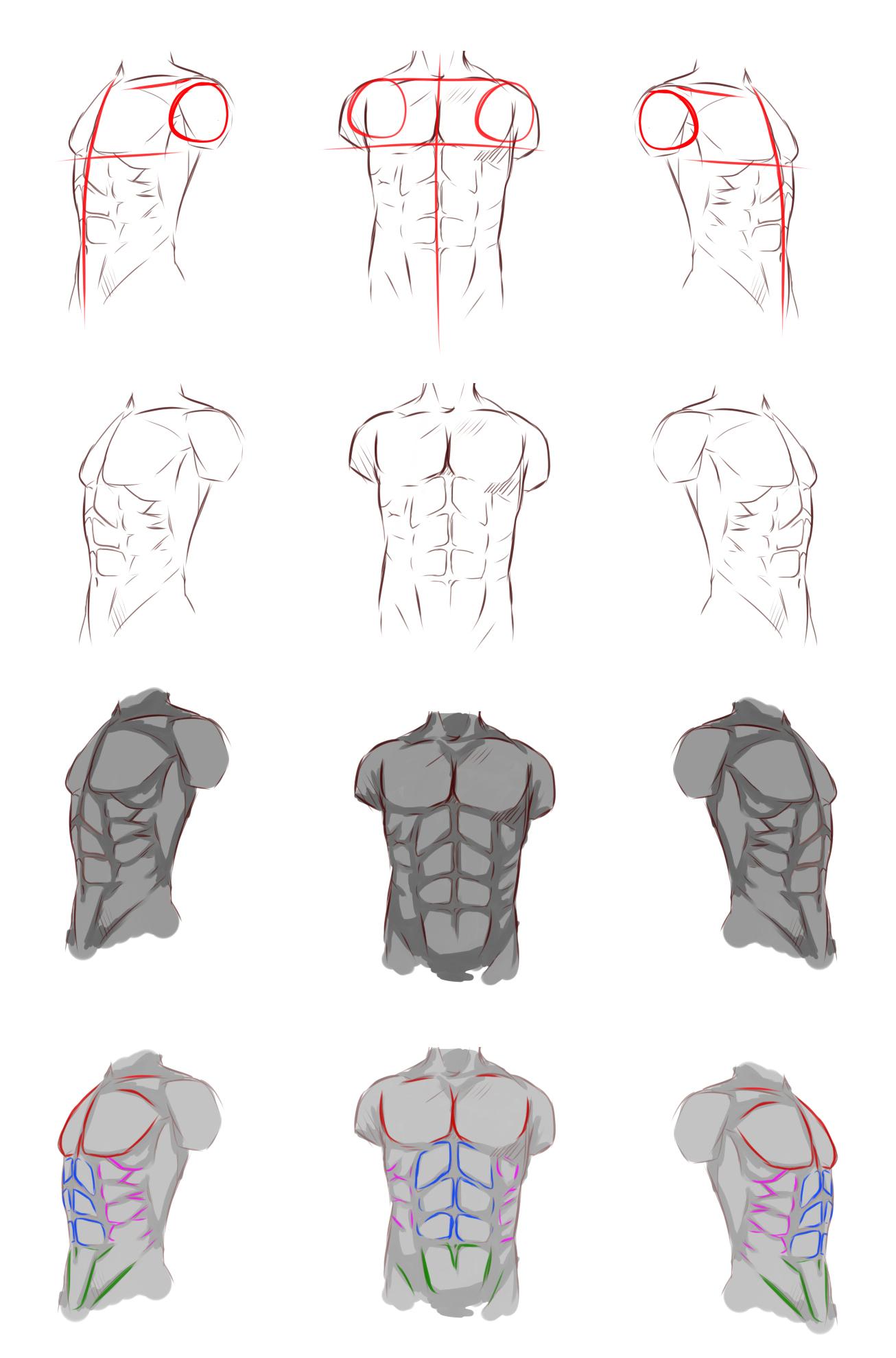 Male anatomy by ryky