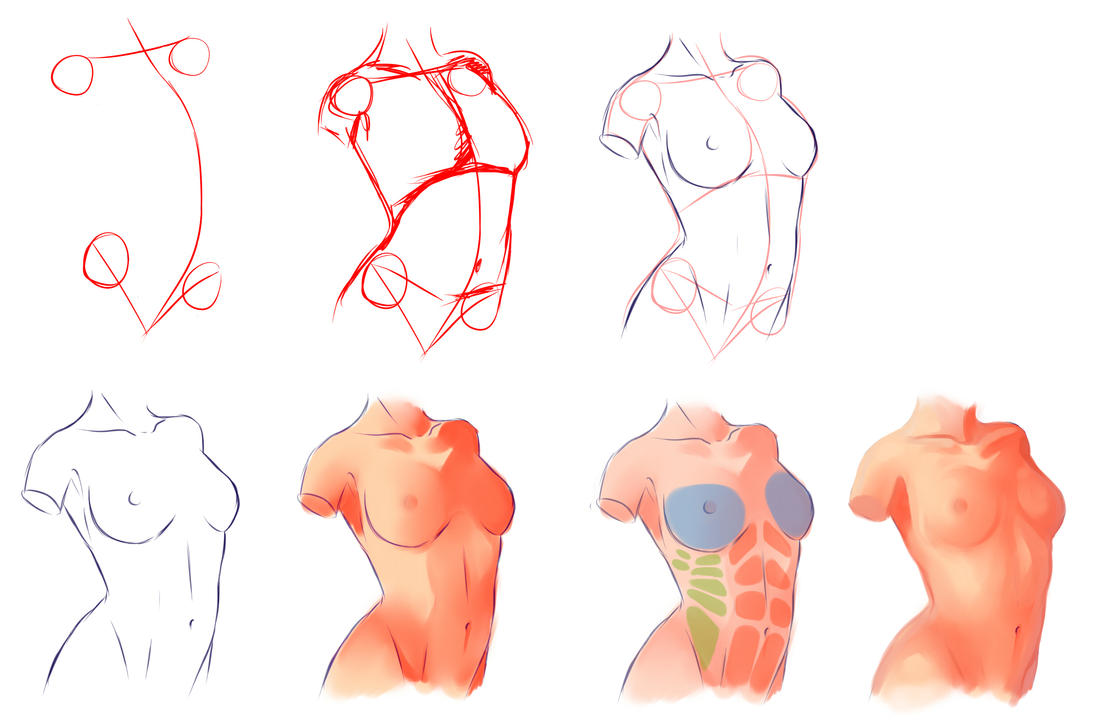 Female Anatomy by ryky on DeviantArt