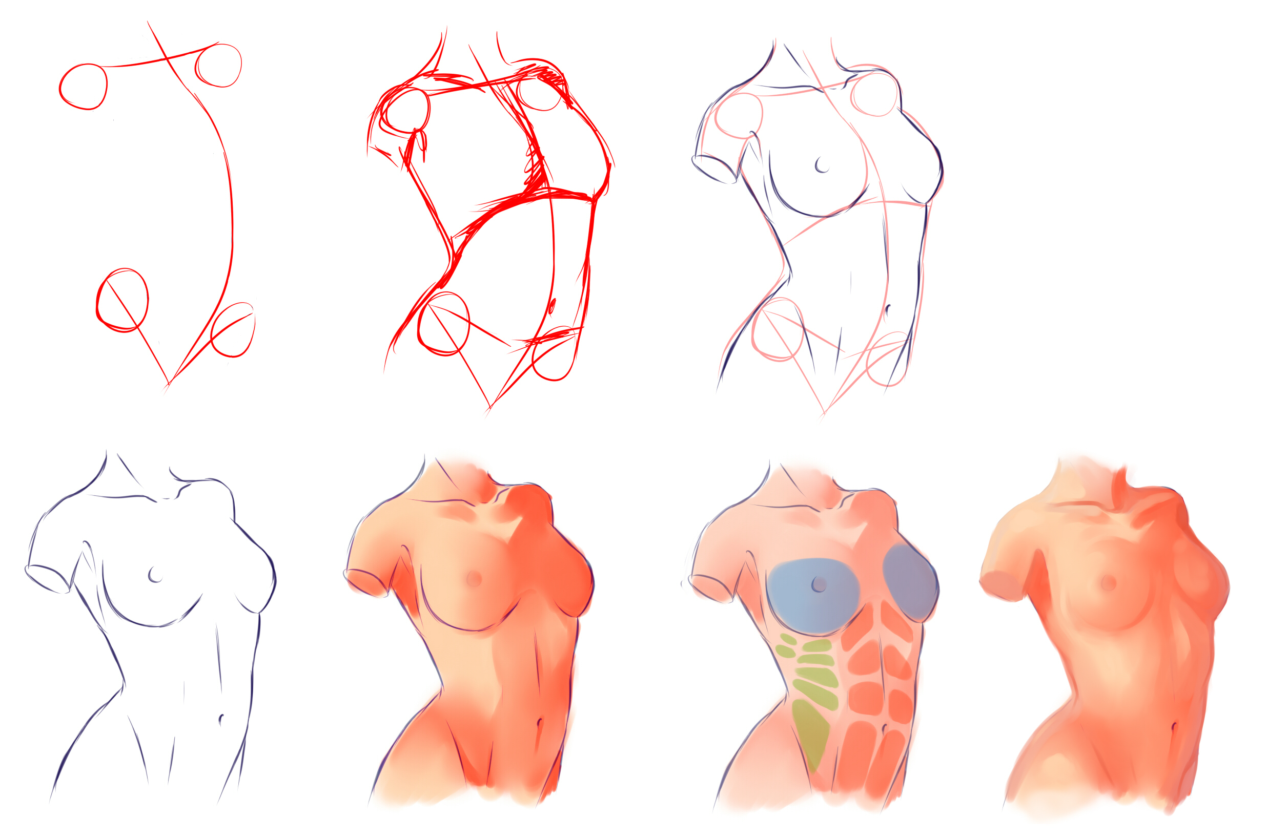 Female Anatomy by ryky on DeviantArt