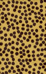 Cheetah by SB-Photography-Stock