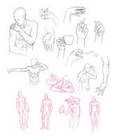 Anatomy Studies by Adreean