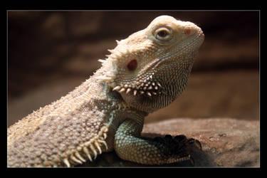 Waiting Lizard by mm13-cz