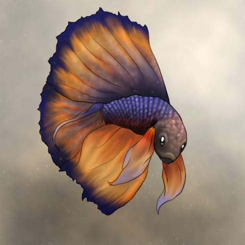 Betta fish by clemikinkajou on deviantart for What kind of fish am i