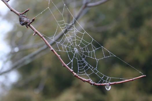 Broken Spider Web