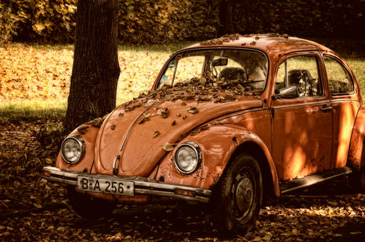 The Autumn Beetle