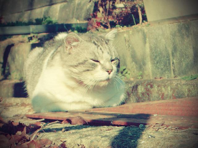 Stray Cat by hydelove