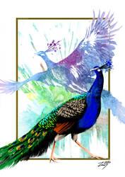 Peacock by RadonKalmor