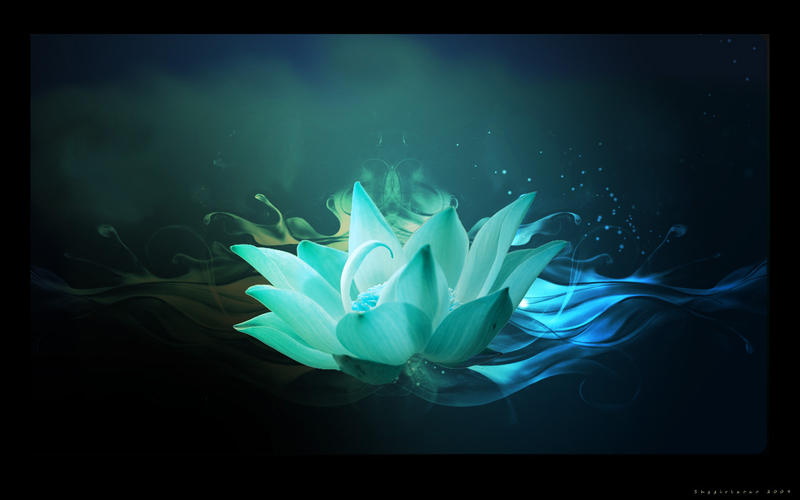 blue lotus flower wallpaper, Beautiful flower