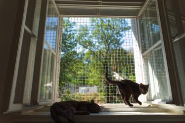 Cats #54862