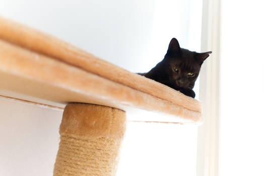 Cats #54863