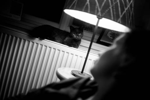 Cats #54864
